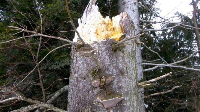 Ein treuer Wegbegleiter im Entlebuch - A forest spirit manifesting itself in the Entlebuch valley.