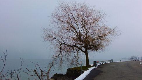 Allein stehst du an den weiten Ufern. Man könnte meinen am offenen Meer zu stehen an diesem Tag wo der Nebel die ganze Landschaft verschluckt. - A lonely tree on the shores of Lake Luzern that looks more like an ocean on this foggy day.