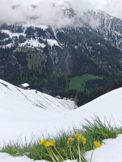 Eine steile Angelegenheit. Immer noch sichtbar und verstärkt durch den Schneefall, sind die Begrenzungen der alten Getreideackerflächen die gegen Süden ausgerichtet waren. - Steep slopes with visible evidence of the former grain growing culture of the Walser people. The grassy lines in the snowy slope indicate the property lines between the various grain fields.